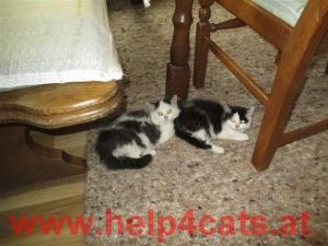 Katzenkinder-Okt.-2013